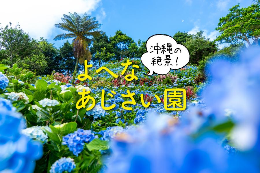 よへなあじさい園の山に咲き誇るあじさい