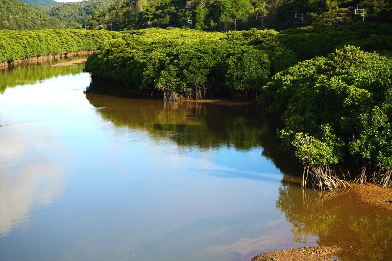 東村ふれあいヒルギ公園のマングローブ林