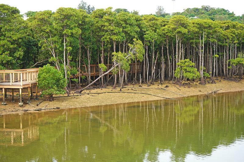 億首川プロムナードのマングローブ林