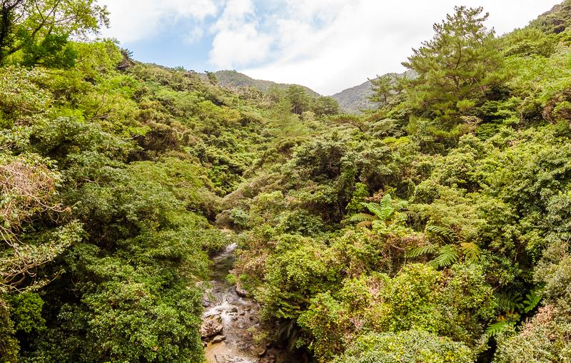 比地大滝の吊り橋から眺めるやんばるの絶景