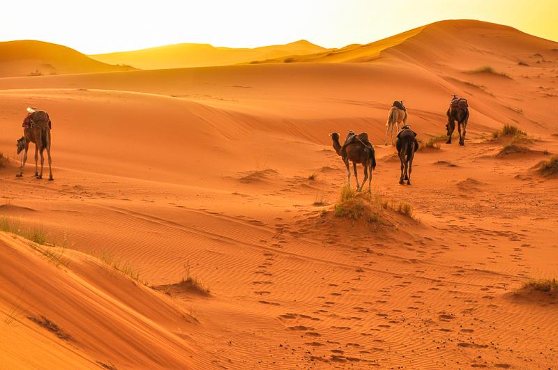 サハラ砂漠とラクダ